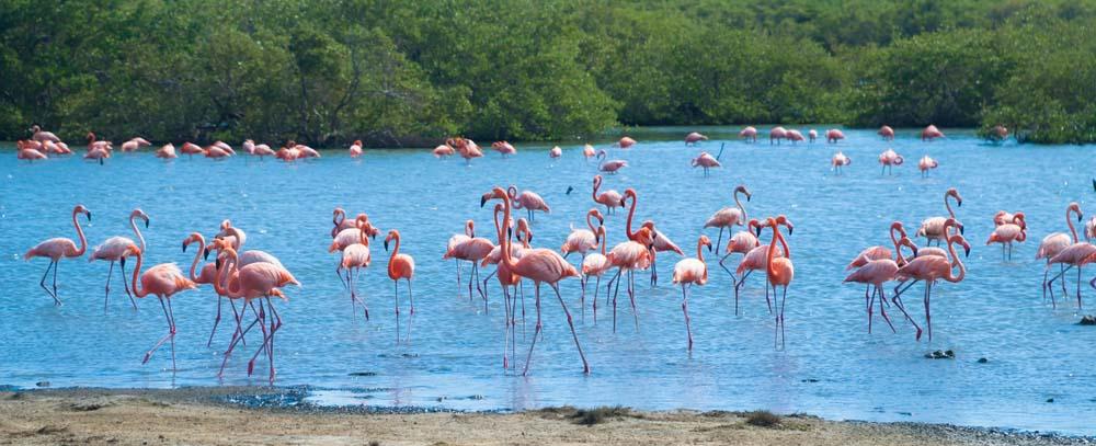 bahamas excursions royal caribbean